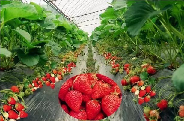 【政策专栏】农业农村部办公厅关于推介发布2018年农业主推技术的通知