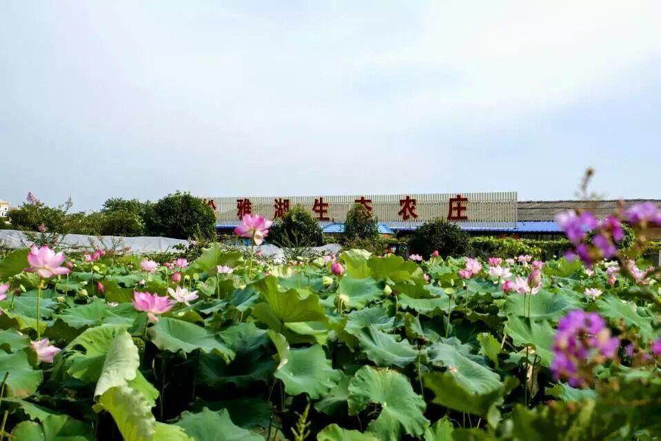 松雅湖生态农庄